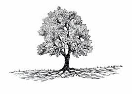 Garden The Way Tree Roots Do Grow By Larry Tree Roots Illustration