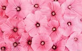 pink flower 2032281