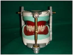 teeth setting jcdr artificial teeth denture teeth removable prostheses