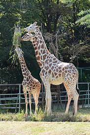 東山 動物園