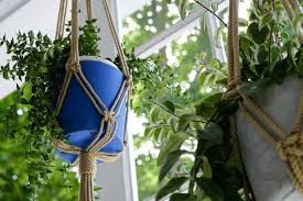 why you should add charcoal to your indoor plants better homes and gardens