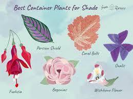 Texas Shade Garden Design 11 Great Shade Plants For Container Gardens