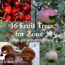 Quartet Citrus Tree Collection From Stark Brou0027s  Fruit Trees Homemade Spray For Fruit Trees