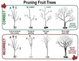 How To Plant Fruit TreesPlanting A Fruit Tree