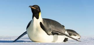 「ペンギン」の画像検索結果