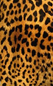 Tiger Pattern Extraordinary Tiger Pattern Truly Madly Deeply