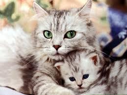 """Résultat de recherche d'images pour """"image de chat"""""""