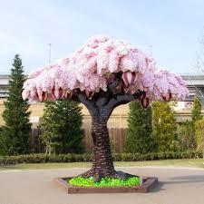 Bunga Sakura Bunga Sakura Ini Akan Berbunga Sepanjang Tahun Penasaran