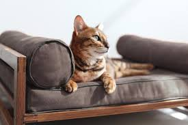 pets furniture. Also From The Talented Designers At Architect Pets, Aldo Lounger Takes Its Inspiration Mid-Century Scandinavian Design. Pets Furniture S