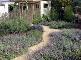 Small Picture California Native Plant Garden Design Garden Design Ideas