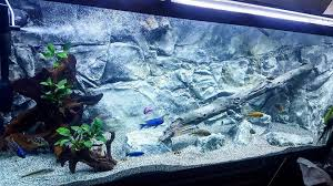 i made the first aquarium background in that room but soon i switched to working in the shed this shed was approximately nine sqm big and that is where