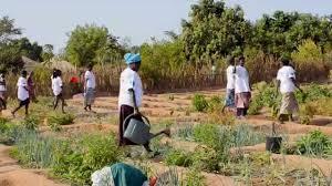 Image result for guinea bissau