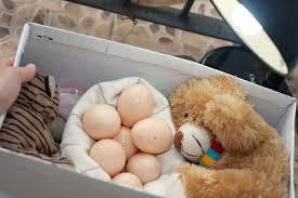 bird egg incubator 12