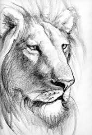 detailed lion drawings in pencil. Brilliant Drawings Lion Drawing On Pinterest  Realistic Pencil Drawings Animal  On Detailed In G