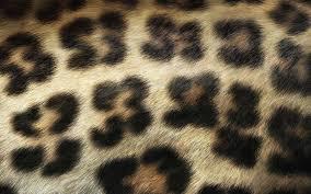 leopard print wallpaper