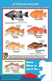 Rockfish Identification Chart Rockfish Noyo Center