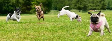 the best small dog breeds kid friendly