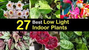 House Plants Low Light Requirements 27 Best Low Light Indoor Plants For Light Starved Rooms