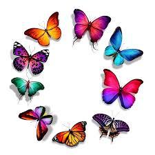 Image result for کد جاوا طرح پروانه