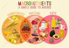 Macronutrient Chart Main Food Groups Macronutrients Carbohydrates Fats And Proteins