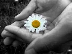 essay on generosity and greatness of spirit generosity essay by gopika anti essays