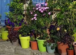 cottage garden pots