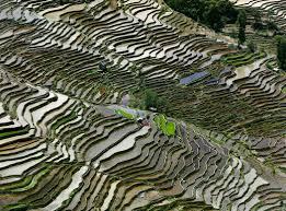 Rice terraces in China, as seen in Watermark. Credit Edward Burtynsky/eOne