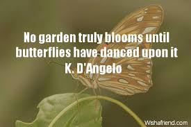 Butterfly Quotes Amazing Butterfly Quotes