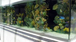 Image result for cost of Aquarium maintenance services