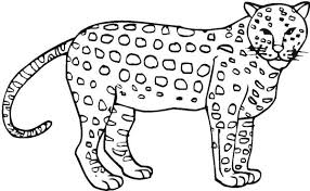 Awesome Cheetah Coloring Page Netart