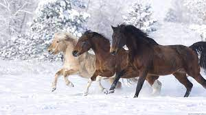 Christmas Horse wallpapers - HD ...