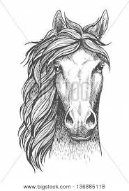 horse face drawing front. Modren Face Beautiful Arabian Stallion Sketch Icon For Horse Breeding Symbol  Equestrian Or Riding Club Emblem Design With Horse Face Drawing Front 1