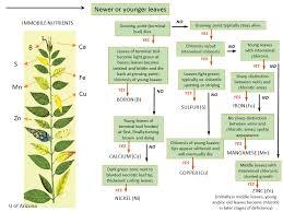 Nutrient Deficiencies Msu Extension Soil Fertility