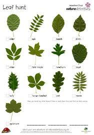 Leaves Education Tree Pinte Identification Outdoor Leaf Vault Identify Bonsai