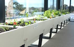 office planter. planter boxes office