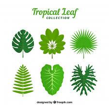 Set de hojas de plantas tropicales | Vector Gratis