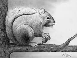 Cool Animal Drawings Yupar Magdalene Project Org