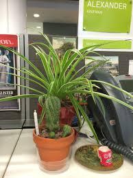 great office plants. Officeplants Great Office Plants