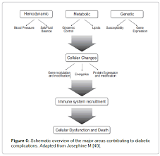 Hypertency Pathophysiology Of Hypertension In Diabetes Mellitus