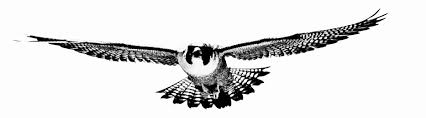 Image result for falcon
