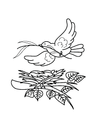 Coloring Pages Bird Nest Coloring Page Of Birds Baby Free
