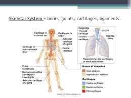 anatomy physiology essay questions