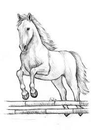 Disegni Da Colorare Di Cavalli Che Saltano Fredrotgans