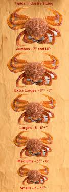 Md Crab Size Chart Steamed Crabs Break Away Ii Sports Lounge Warehouse Venue