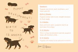 60 Unique Golden Retriever Puppy Weight Chart Home Furniture