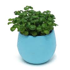 office flower pots. GetSubject() AeProduct. Office Flower Pots L