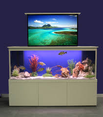 tank furniture. Breezy Fish Tank Room Divider With Blue Paint Wall And White Baseboards Also Various For Modern Home Design Ideas Furniture