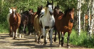 Horse Coat Patterns