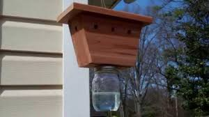 setting up a carpenter bee trap