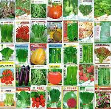 garden seeds.  Seeds 600 Seeds Wholesale And Retail 30 Kinds Of Different Vegetable Seed Family  Potted Balcony Garden Four Seasons Planting  For DHgatecom